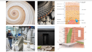 Biomimicry in the Built Environment